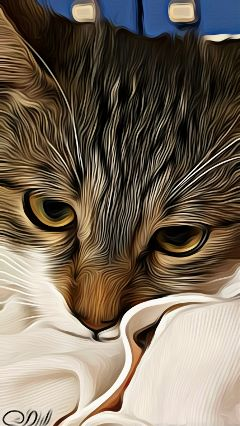 freetoedit oilpaintingeffect mypet cat serenity wapsketchportrait