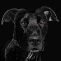 drawing mydrawing digitaldrawing digitalpainting dog