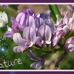 nature flower edited colurfull