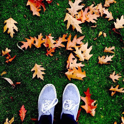 interesting nature leaves autumn shoes wppprimarycolors wppautumnvibes