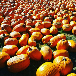 october october2016 octoberpumpkins freetoedit followme