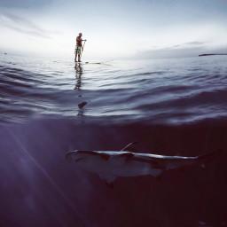 edited madewithpicsart interesting sea shark people
