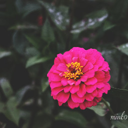 colorful emotions flower nature