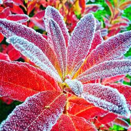 nature winter fall auttum winteriscoming freetoedit