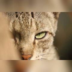 freetoedit thedimondcity cat f iso100