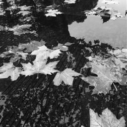 art interesting nature blackandwhite black