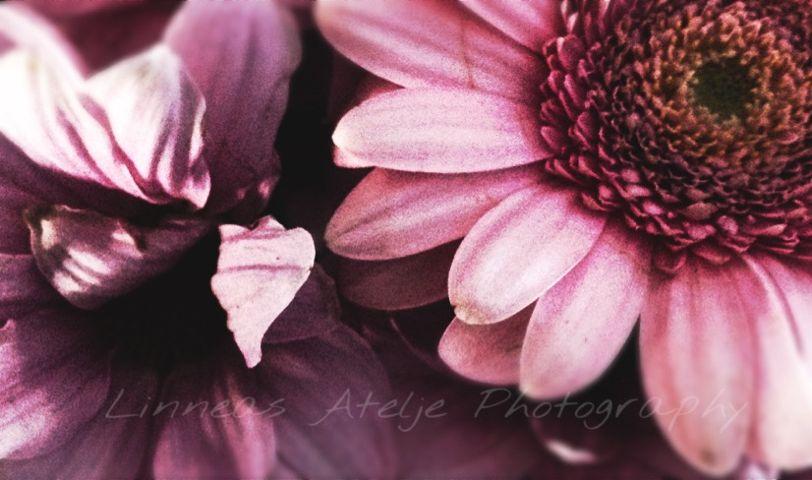interesting art flowers photography stilllife